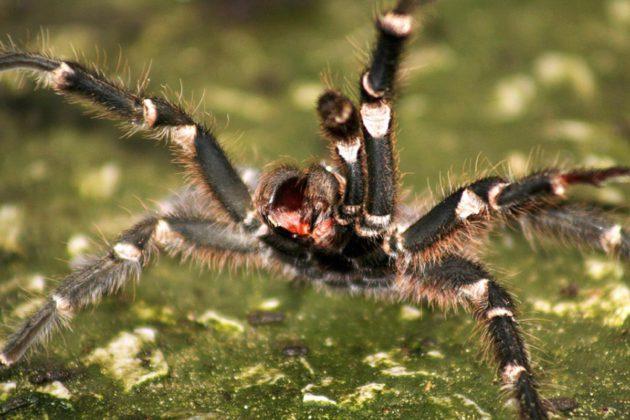 Pelko voi yllättää aikuisenkin. Monet kammoavat hämähäkkejä.