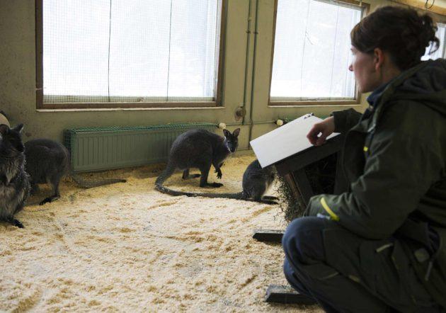 Villieläinlääkäri hoitaa Korkeasaaren eläimiä.