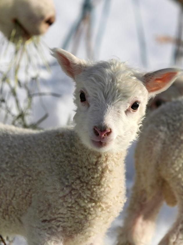 lammas-joulu