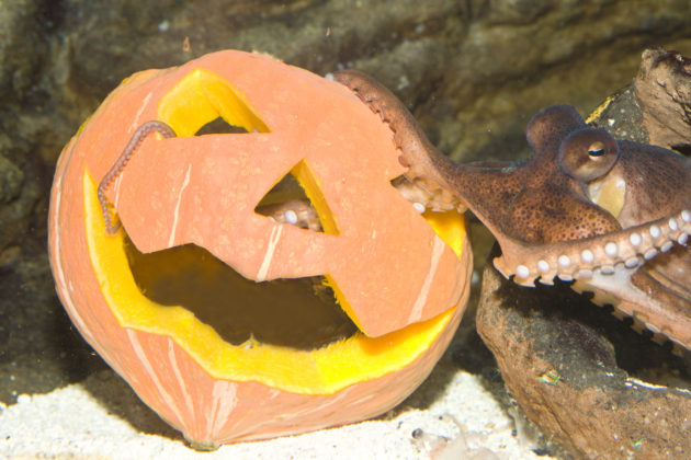 meritursas-helmut-halloween-2