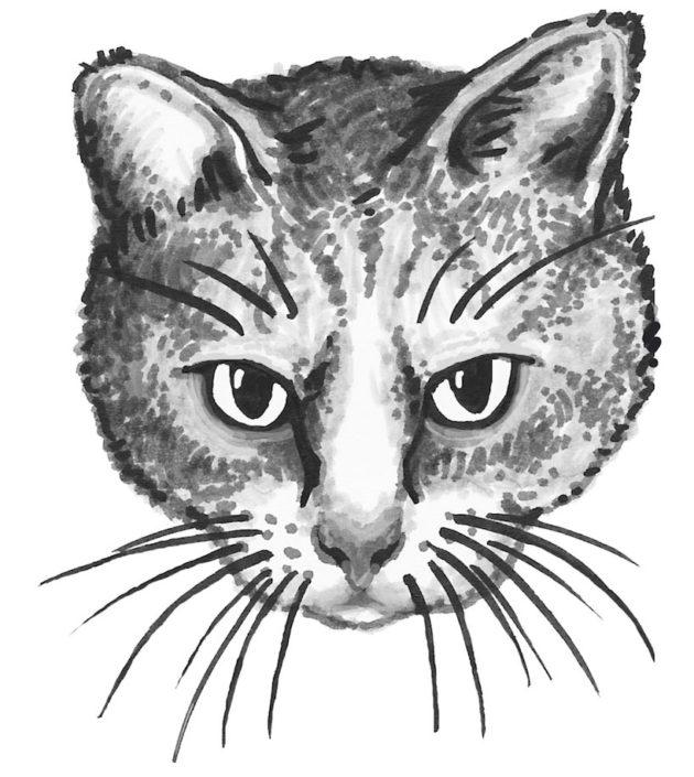 kissa-kuvitus-1