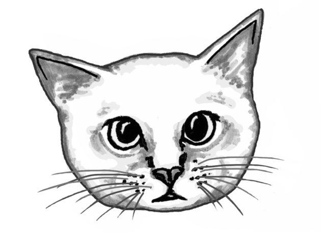 kissa-kuvitus-2