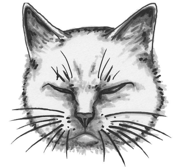kissa-kuvitus-3