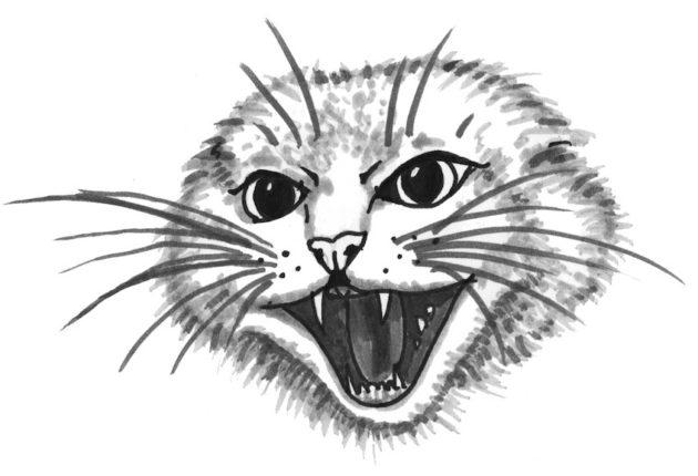 kissa-kuvitus-4
