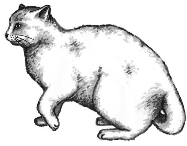 kissa-kuvitus-5