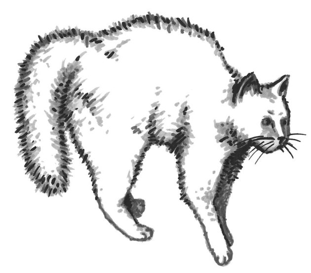 kissa-kuvitus-7