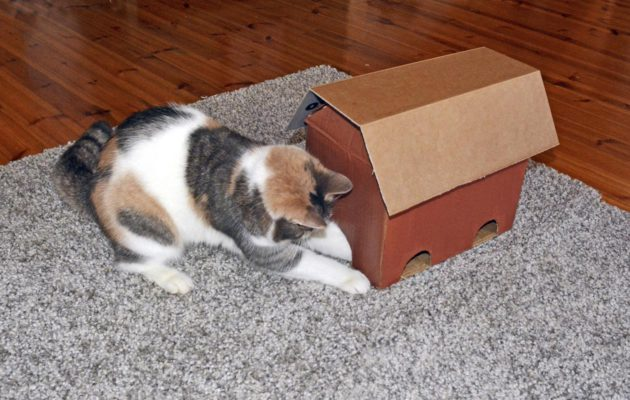 Virikelelut kissoille