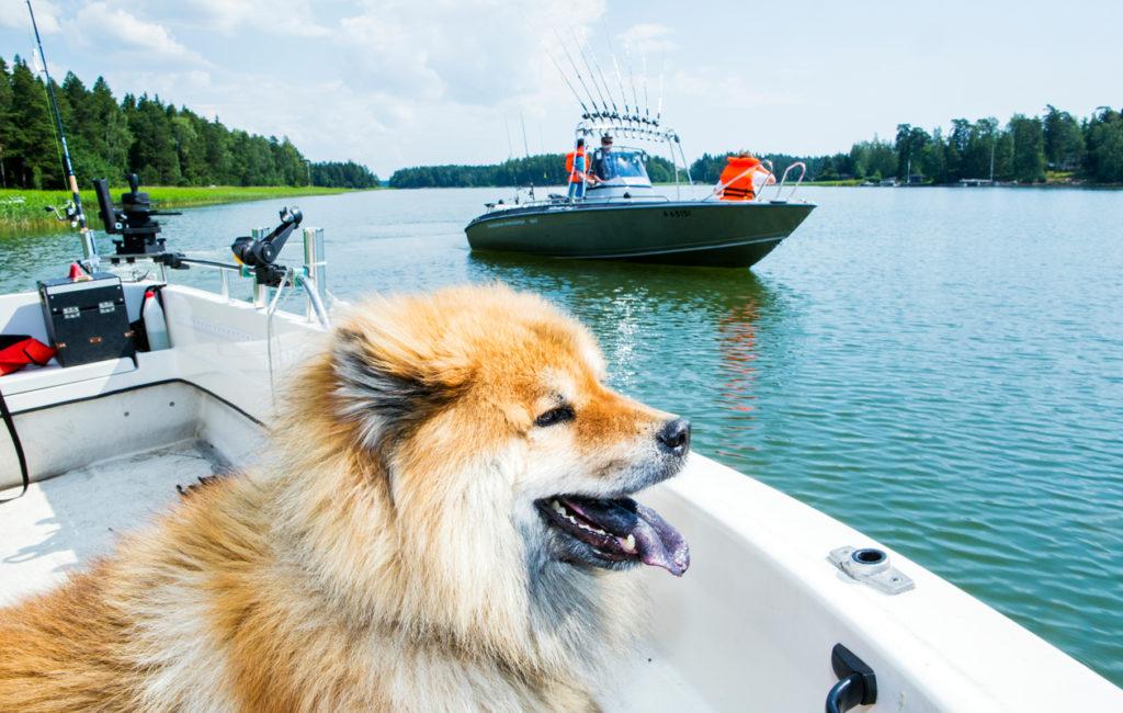 Into-koira oli mukana Etelä-Suomen vapaa-ajankalastajapiirin järjestämällä kuhaleirillä kesällä 2014.