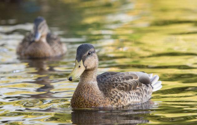 Roskaaminen voi vahingoittaa vakavasti luonnoneläimiä ja erityisesti lintuja.