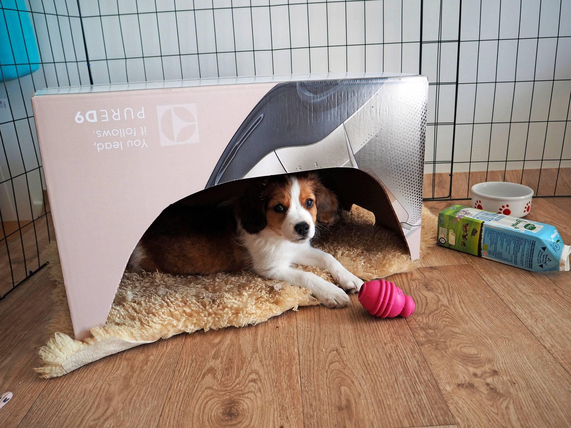 koiranpentu pahvilaatikossa