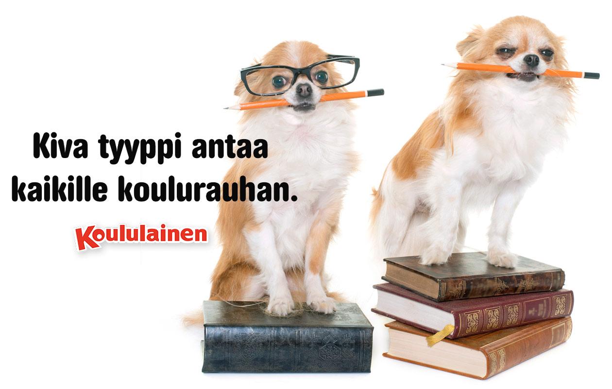 kaksi koiraa kouluhommissa