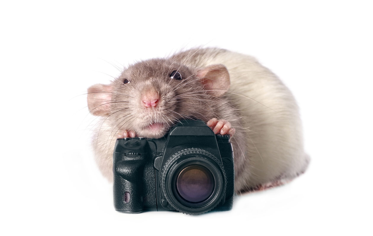 rotta ja kamera