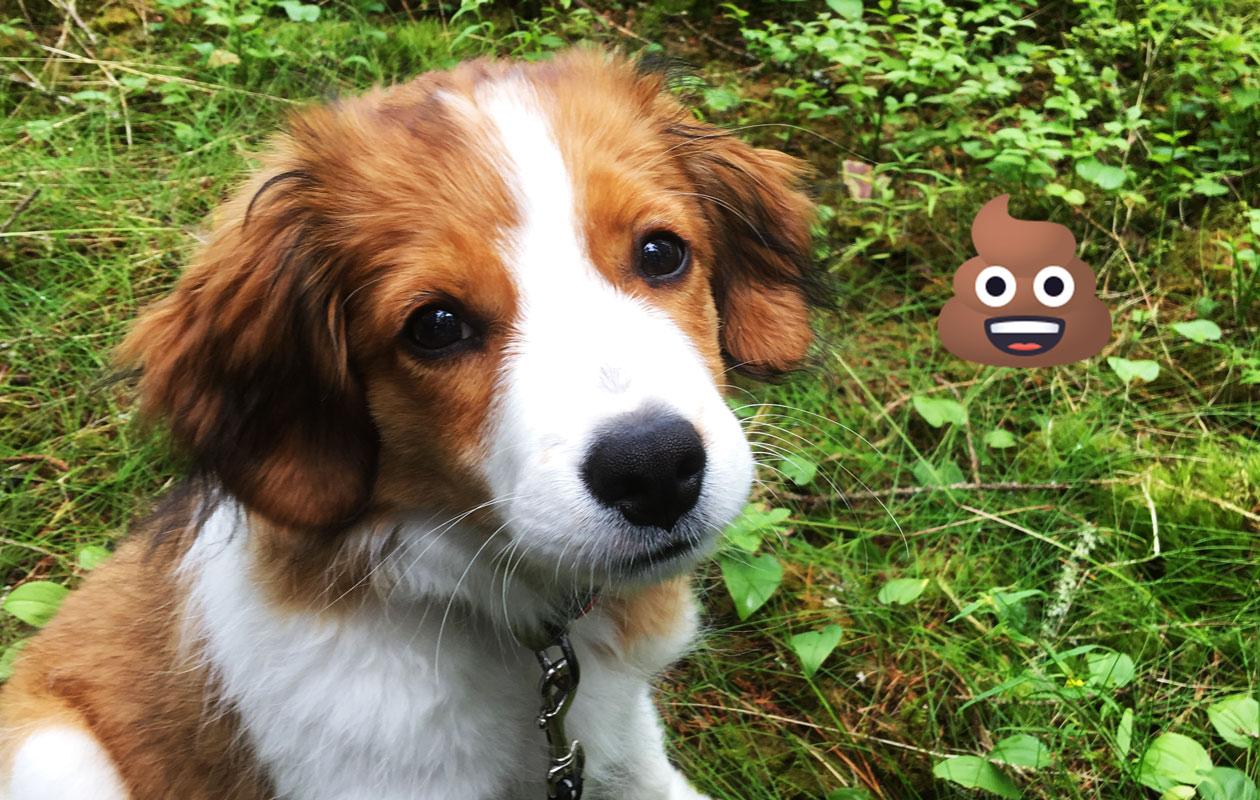 Masa-koira metsässä