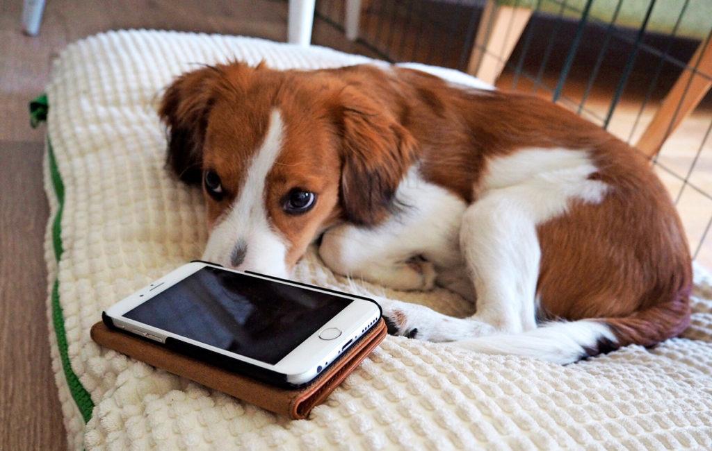 Jos Masa osaisi kirjoittaa, perheen puhelimet olisivat täynnä pulinaa. Koiranpentu rakastaa seuraa.