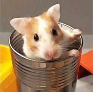 7. Raksu-hamsteri