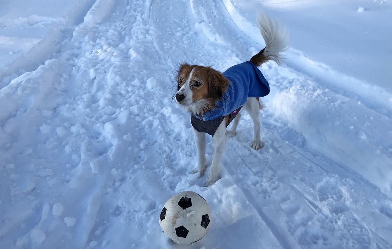 koira pallon kanssa