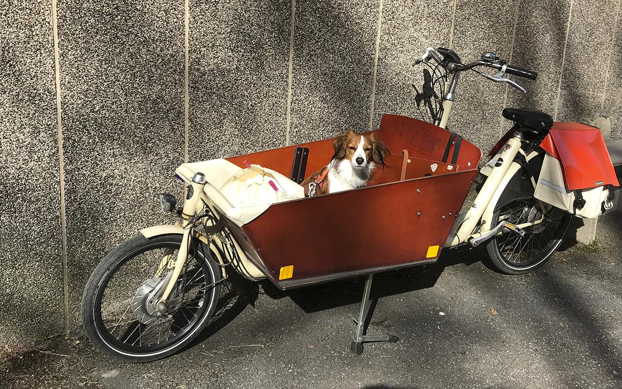 koira pyörän kyydissä