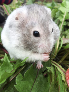 10. Fred-hamsteri