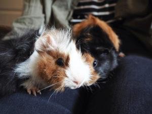 5. Marsut Buddy ja Bruno