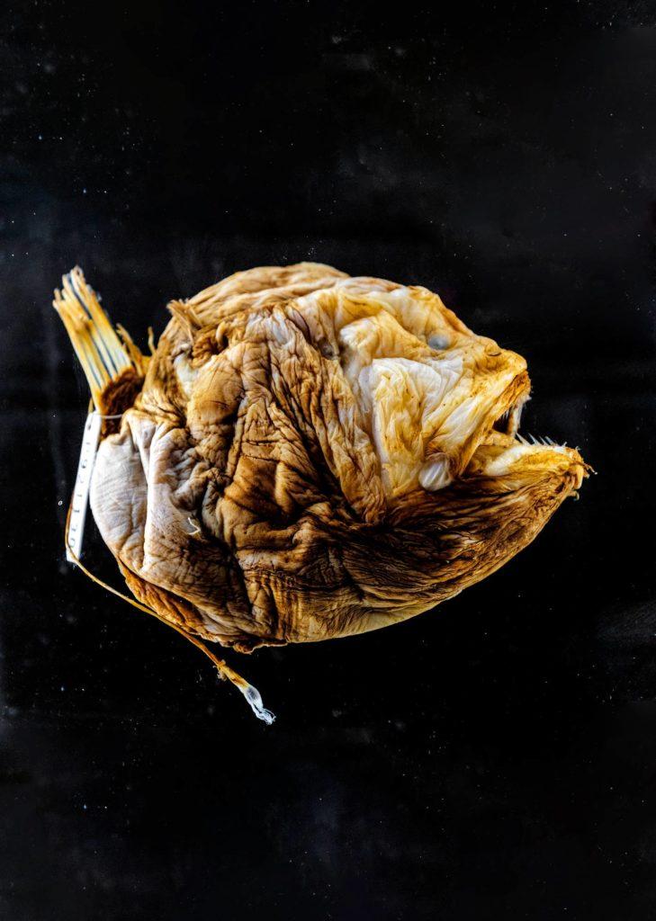 Syvänmeren kalat ovat usein hätkähdyttävän näköisiä, mutta pimeydessä ulkonäkö ei herätä huomiota.