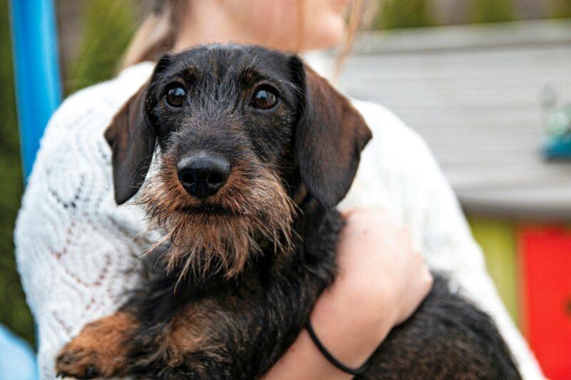 Koiran halaaminen, rapsuttelu ja leikittäminen lisää hyvää oloa ja rauhoittaa jännittynyttä mieltä.
