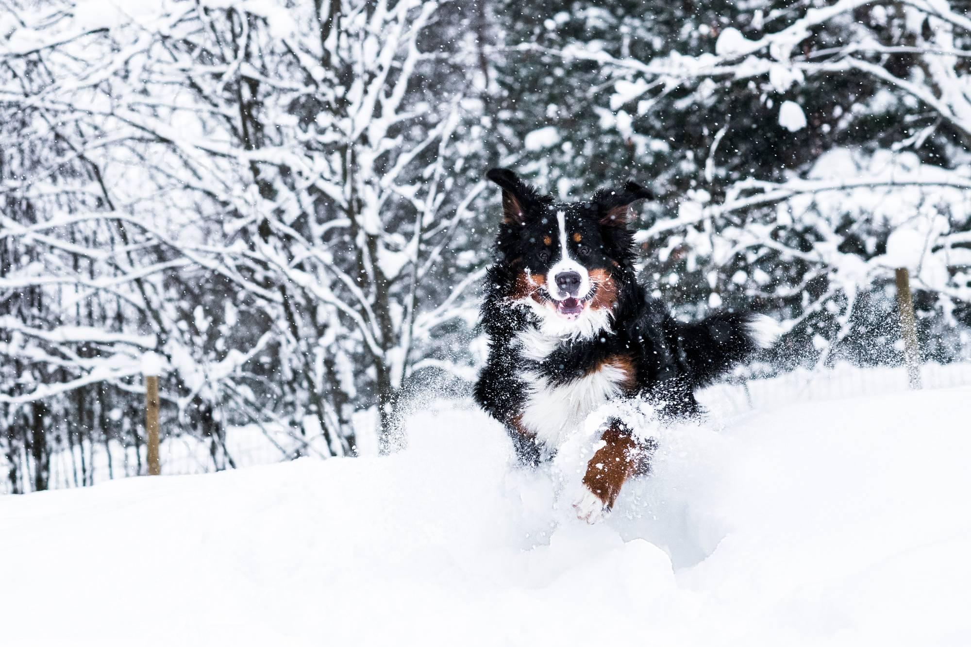 Vuoden lemmikki 2020 -kilpailun voitti Tahvo-koira.